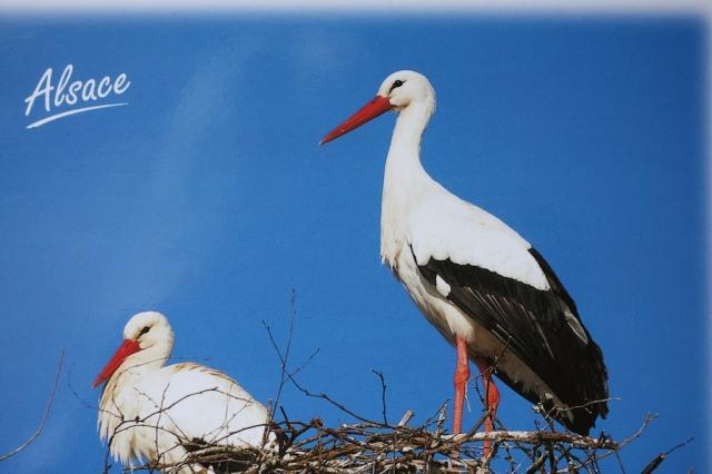 stork-postcard