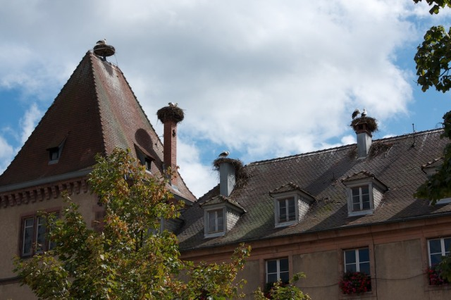 storks-in-munster